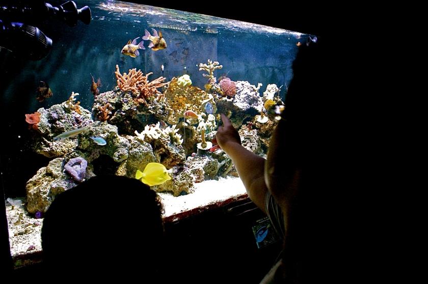 Crianças e o aquário, por Edison Veiga